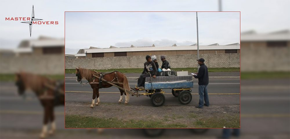 Master Movers Support the Cart Horse Protection Association